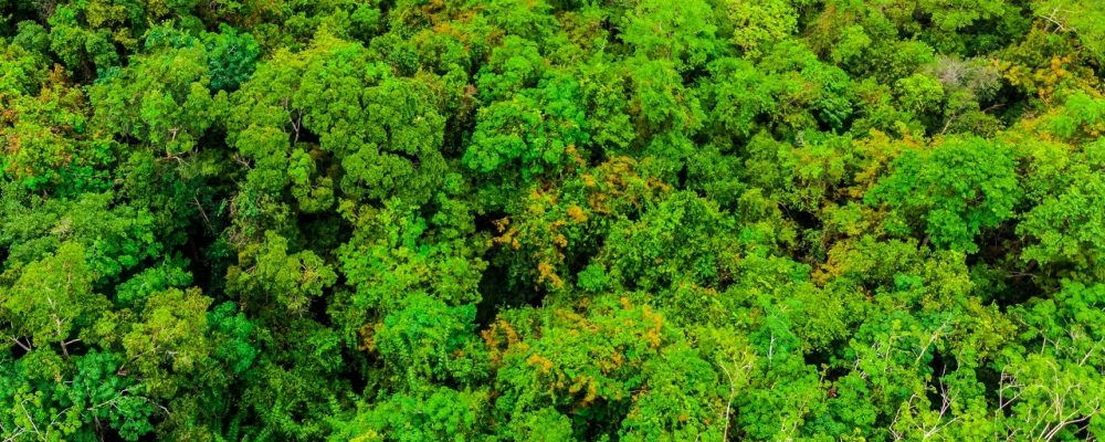 Dia de Proteção as Florestas – 17 de Julho